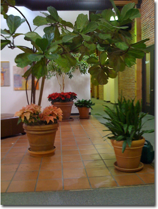 Indoor Plant Design Sales Maintenance Horticultural Consulting Live Color Service Marin