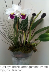 Cattleya orchid arrangement