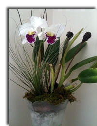Staged Orchid